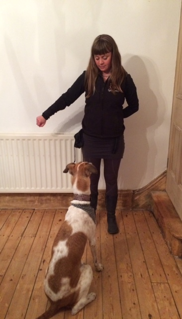 Dog training haworth